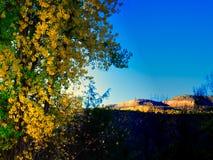 Листья осени и красные скалы стоковое изображение rf