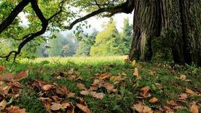 Листья осени и падения на корне дерева Стоковое Изображение RF