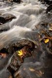 Листья осени и речные пороги потока Стоковое Изображение
