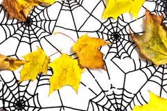 Листья осени и черное spiderweb как предпосылка хеллоуина Стоковая Фотография RF