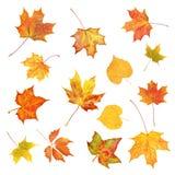 Листья осени Комплект красочных листьев падения изолированных на белизне Стоковые Изображения RF