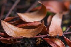 Листья осени конца-вверх сухие Стоковое фото RF