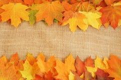 Листья осени красные, желтая, оранжевая предпосылка Стоковое Фото
