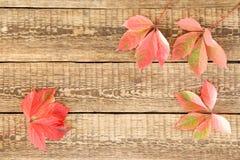 Листья осени красные и зеленые Стоковое Фото