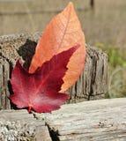 Листья осени красные и оранжевые на столбе загородки стоковая фотография