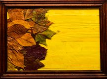 Листья осени красочные на деревянной текстуре в рамке Предпосылка осени, древесина и упаденные листья, космос экземпляра Клен и д Стоковые Фото