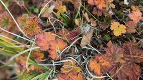 Листья осени красочные на предпосылке зеленой травы Взгляд сверху Намочите желтые листья осени на зеленой траве, взгляд сверху яр Стоковое Фото