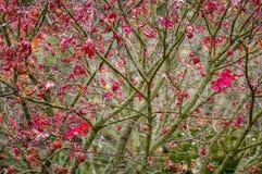 Листья осени клена Стоковые Изображения RF