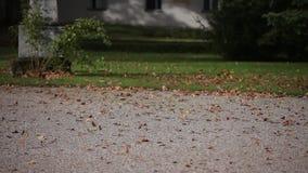 Листья осени летают над земной красивой природой сток-видео