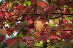 Листья осени листопада закрывают вверх по предпосылке Стоковые Изображения