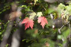 Листья осени листопада закрывают вверх по предпосылке Стоковое фото RF