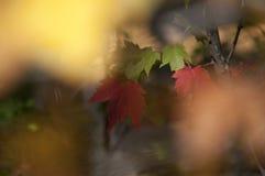 Листья осени листопада закрывают вверх по предпосылке Стоковая Фотография