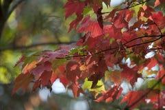 Листья осени листопада закрывают вверх по предпосылке Стоковая Фотография RF