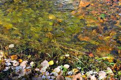 Листья осени на банке и на дне реки таблица сквош собрания осени цветастая Справочная информация стоковое фото