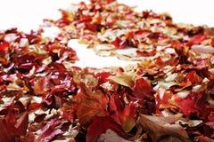 Листья осени на белом поле Стоковая Фотография RF