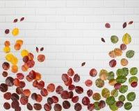 Листья осени на белой предпосылке кирпича Стоковая Фотография RF