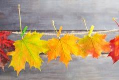 Листья осени на веревочке с штырями на деревянной предпосылке Стоковые Фотографии RF
