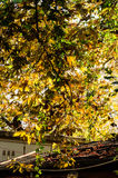 Листья осени на верхней части крыши Стоковая Фотография RF