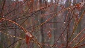 Листья осени на ветви с raindrop видеоматериал