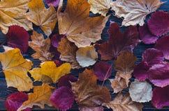Листья осени на голубой деревянной предпосылке Стоковое фото RF