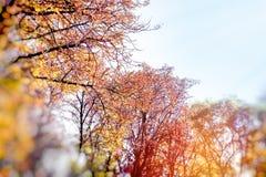 Листья осени на дереве в лесе, дереве покрывают стоковые фотографии rf