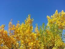 Листья осени на день падения Стоковое фото RF