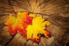 Листья осени на дереве Стоковые Изображения