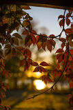 Листья осени на заходе солнца стоковые фотографии rf