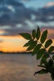 Листья осени на заходе солнца стоковые изображения rf