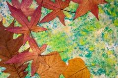 Листья осени на зеленой предпосылке стоковые фотографии rf