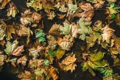 Листья осени на земле стоковая фотография
