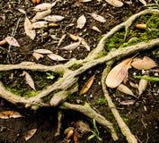 Листья осени на земле Стоковое Изображение RF