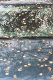 Листья осени на клобуке и лобовом стекле автомобиля Стоковое Изображение