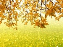 Листья осени на предпосылке bokeh яркого блеска Стоковые Изображения RF