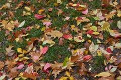 Листья осени на пути в лесе Стоковые Изображения