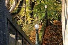 Листья осени на пути стоковая фотография rf