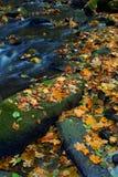 Листья осени на реке стоковые изображения rf