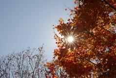 Листья осени на солнечный день Стоковое Фото