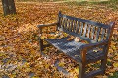 Листья осени на стенде стоковое фото rf
