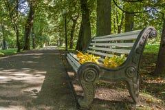 Листья осени на стенде Стоковая Фотография RF