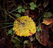 Листья осени на том основании Стоковое Изображение RF