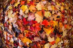Листья осени на том основании стоковые изображения rf