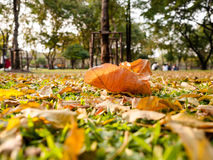 Листья осени на том основании Стоковые Изображения