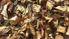 Листья осени на том основании стоковое фото