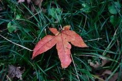 Листья осени на траве стоковые изображения rf
