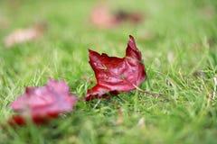 Листья осени на лужайке Стоковое Изображение