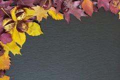 Листья осени на черной предпосылке Стоковые Фото