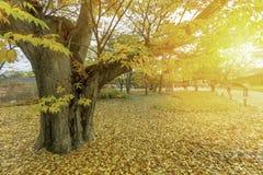 Листья осени на Южной Корее Сеула стоковые изображения rf
