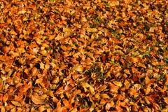 Листья осени на BrasÃlia, Бразилии стоковые фотографии rf