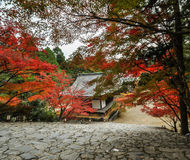 Листья осени на jingo-ji в Takao, Киото, Японии Стоковое Изображение RF